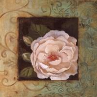 "Antique Rose IV by Jillian Jeffrey - 12"" x 12"""