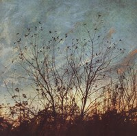 Wild Grass II Fine Art Print