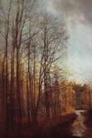 Winter Light I Fine Art Print