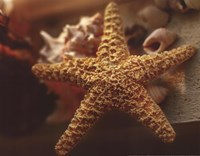 """14"""" x 11"""" Starfish Pictures"""