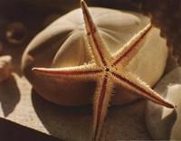 Starfish II Fine Art Print