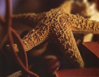 Starfish IV Fine Art Print