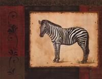 Savanna Zebra Fine Art Print