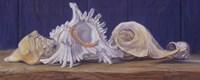 "Shells I by Lucie Bilodeau - 20"" x 8"""