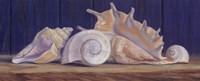 "Shells II by Lucie Bilodeau - 20"" x 8"""