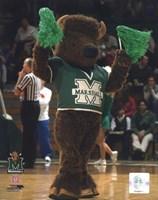 "Marco - Marshall University Thundering Herd Mascot by Daphne Brissonnet - 8"" x 10"""