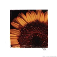 "12"" x 12"" Sunflower Photography"
