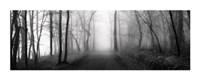 "Woodland Walk by Erin Clark - 40"" x 16"""
