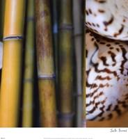 Bamboo II Fine Art Print