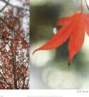 Autumn Leaves I Fine Art Print