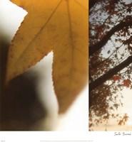 Autumn Leaves II Framed Print