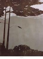 Canopy Fine Art Print