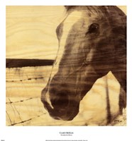 Portrait of a Horse Fine Art Print