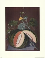 White Seeded Rock Melon Fine Art Print
