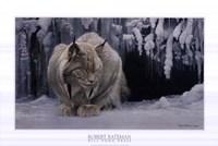 Dozing Lynx (detail) Fine Art Print