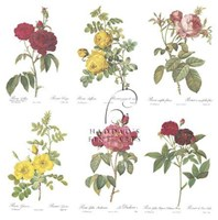 "Roses (Set of Six) by Pierre-Joseph Redoute - 12"" x 18"""