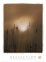 Reflection-Beach Grass Fine Art Print