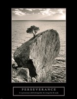 Perseverance - Lone Pinyon Tree by Mali Nave - various sizes