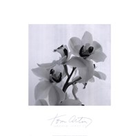 Orchid Spray II Fine Art Print