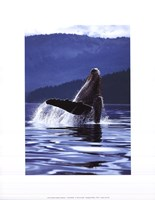 "Humpback Whale by Art Wolfe - 11"" x 14"""