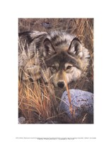 """11"""" x 14"""" Wolf Pictures"""