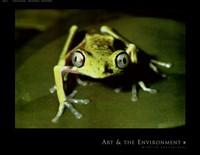 Maki Frog Fine Art Print