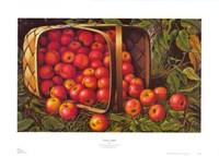 Country Apples Fine Art Print
