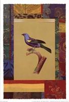 Blue Green Tanager Fine Art Print