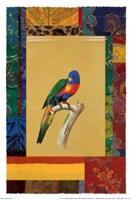 Australian Parrot Fine Art Print
