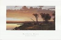 Buffalo Days Fine Art Print