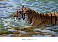 Afternoon Swim Fine Art Print