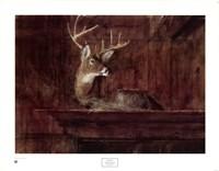 Eleven Pointer, 1985 Fine Art Print