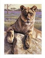 Serengeti Lioness Fine Art Print