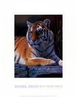 Bengal Tiger Fine Art Print