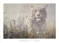 Monsoon- White Tiger (detail) Framed Print