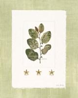 Starfish Botanical IV Fine Art Print