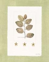 Starfish Botanical III Fine Art Print