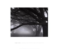 Cypresses, Skyline Drive, South San Francisco, 1996 Fine Art Print