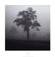 Fog Tree Study I Fine Art Print