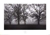 Fog Tree Study IV Fine Art Print