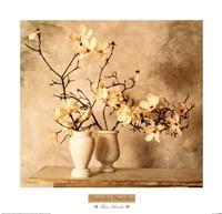 Magnolia Branches Fine Art Print
