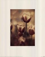 Tinted Tulips III Fine Art Print