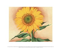 A Sunflower from Maggie, 1937 Fine Art Print