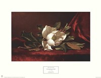 The Magnolia Flower Fine Art Print