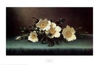 Four Cherokee Roses Fine Art Print