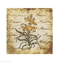 Yellow Petit Botanical Fine Art Print