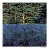 Shadowed Meadow, Sunlit Pines Fine Art Print