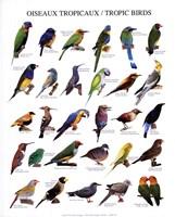 "Tropic Birds by Mali Nave - 10"" x 12"" - $9.49"