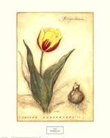 Keizerskroon Tulip Framed Print