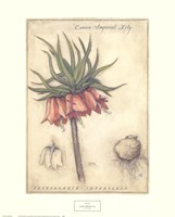Crown Imperial Lily Fine Art Print